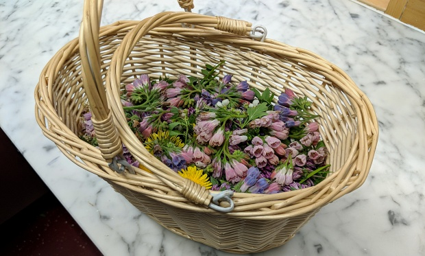 Edible Flowers - Foraged from the Welbeck Estate